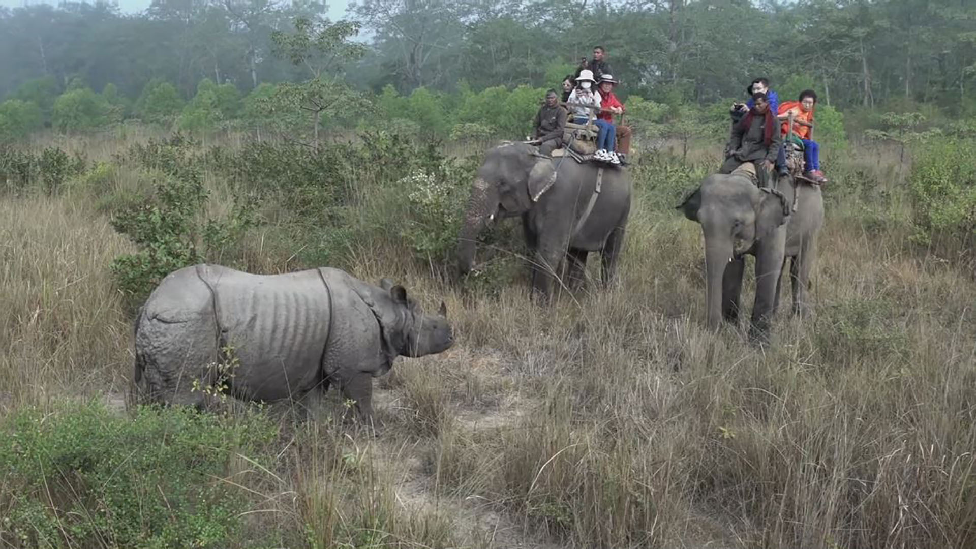 Chitwan National Park Wildlife and Jungle Tour